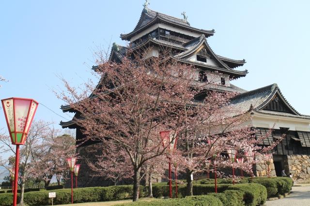 ▲松江城山公園の桜も八分咲き